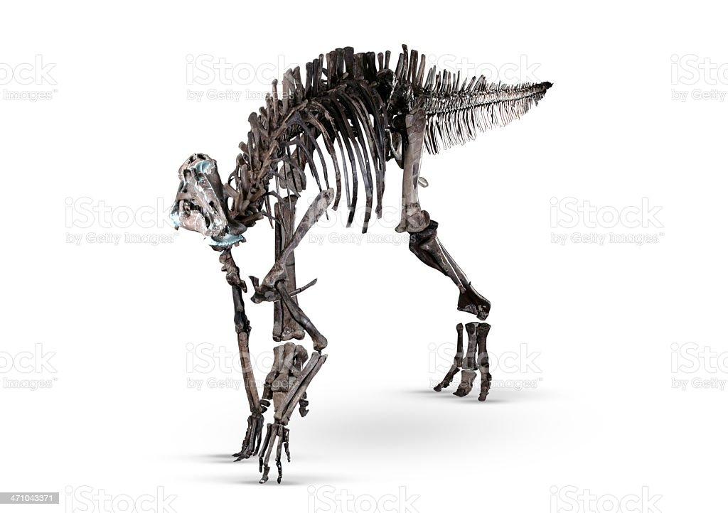 Dinosaur Fossil royalty-free stock photo