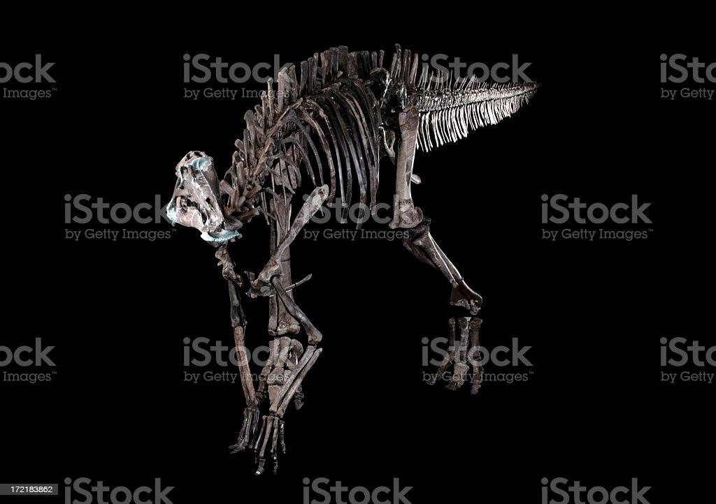 Dinosaur Fossils royalty-free stock photo