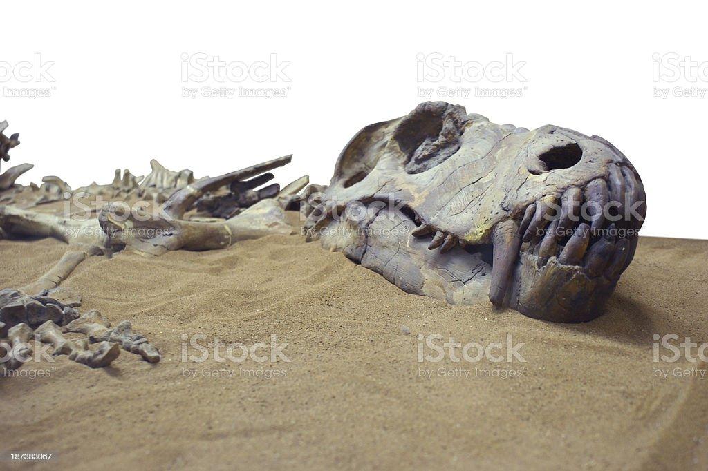 Dinosaur in the send stock photo