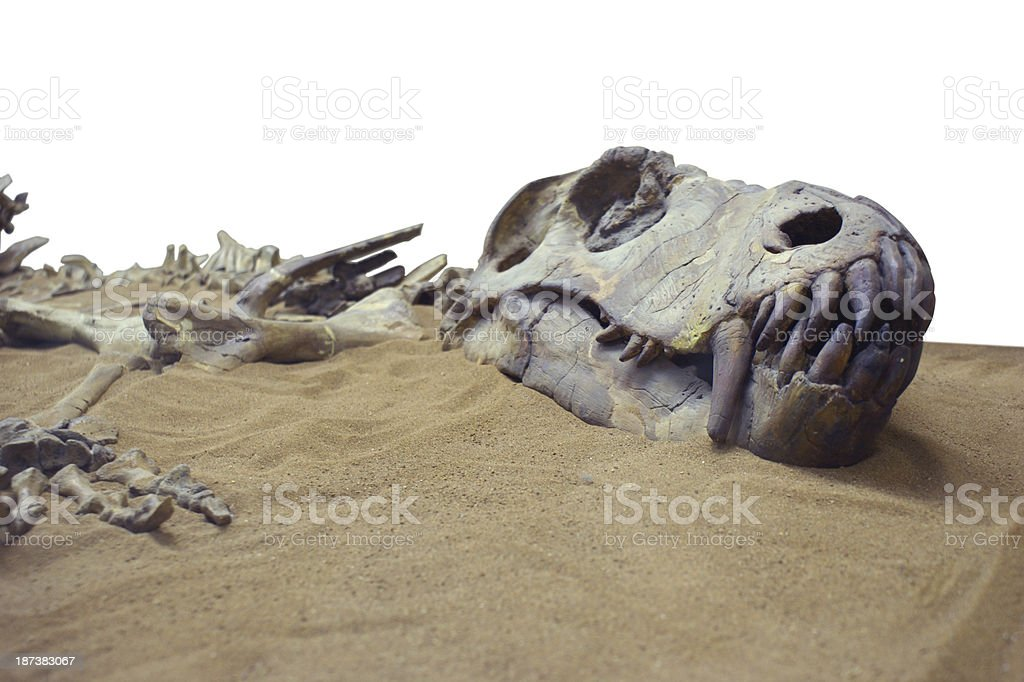 Dinosaur in the send stock photo