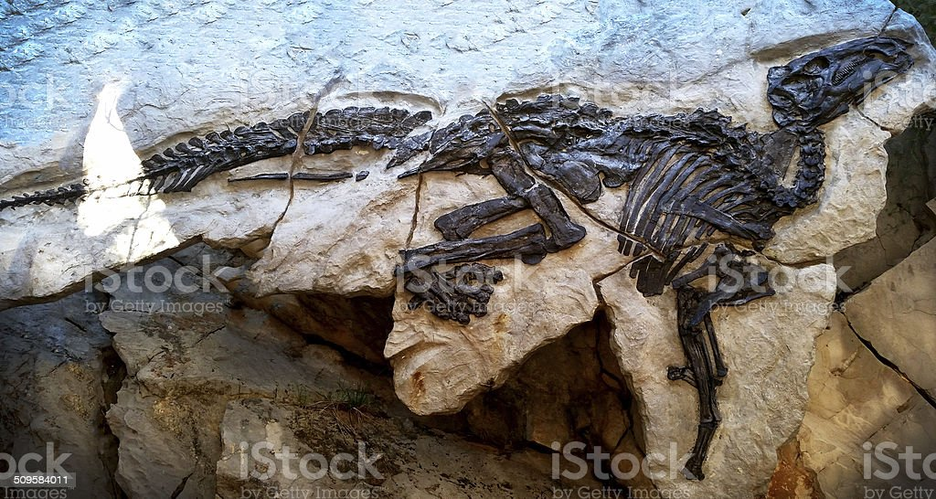 Dinosaur skeleton - fossil stock photo