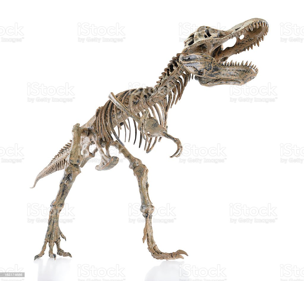 Dinosaur Skeleton stock photo