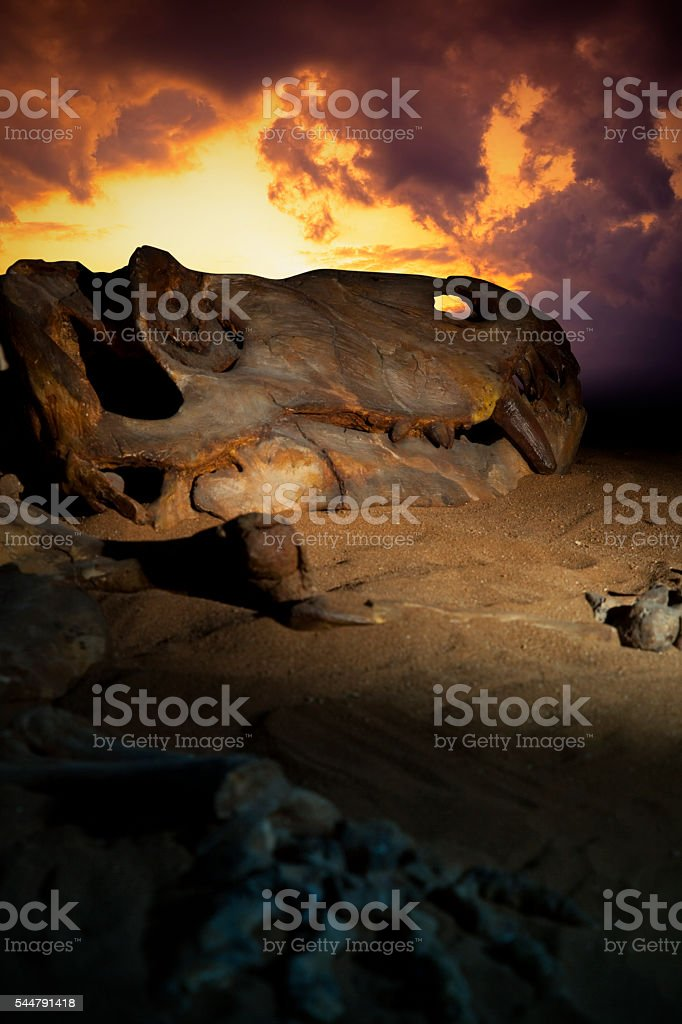 Dinosaur Skull And Skeleton stock photo