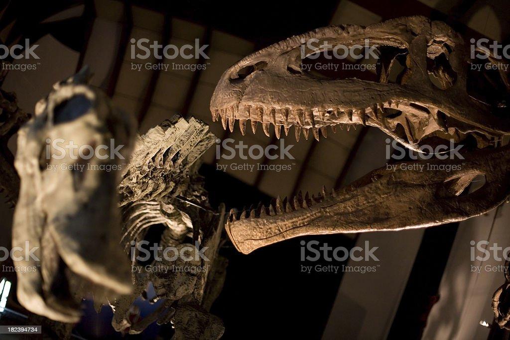 Dinosaur skulls stock photo
