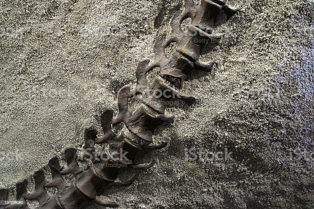 Dinosaur Tail royalty-free stock photo