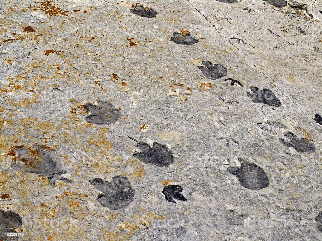 Dinosaur Tracks Cretaceous royalty-free stock photo
