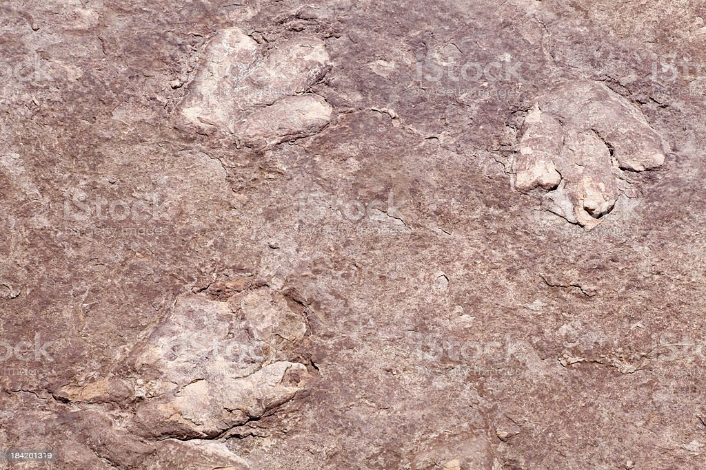 Dinosaur tracks  in sandstone Page, Arizona, USA royalty-free stock photo