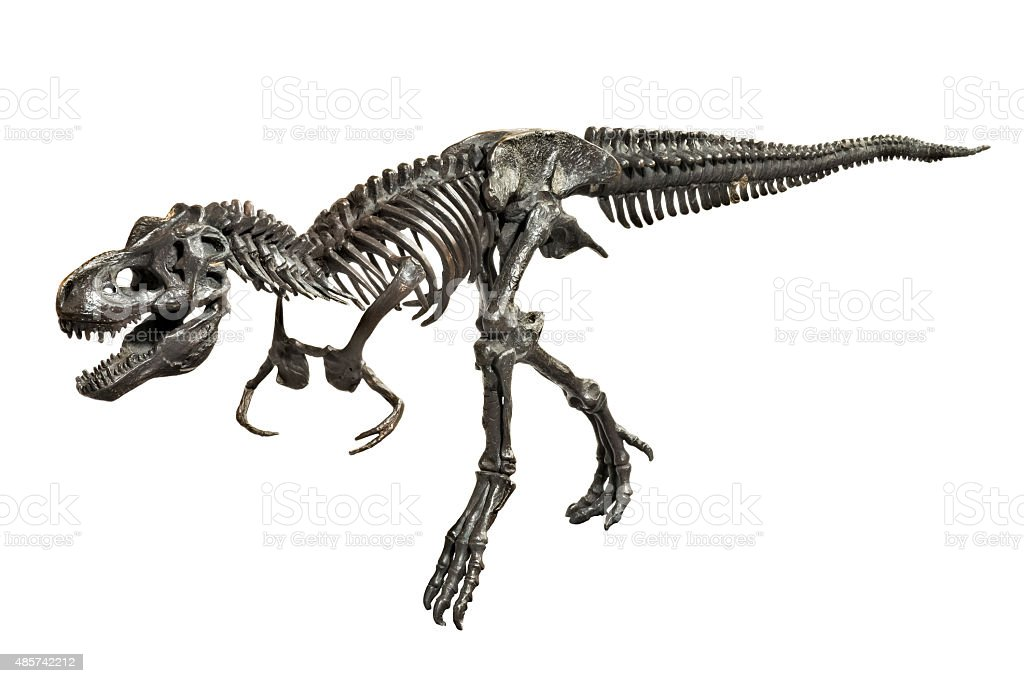Dinosaur Tyrannosaurus-Rex skeleton metal model stock photo