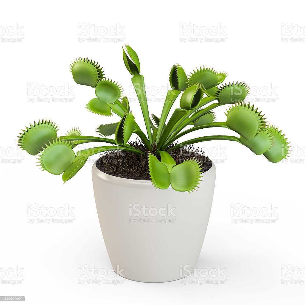 Dionaea muscipula isolated on white background. 3D Rendering, 3D Illustration. stock photo