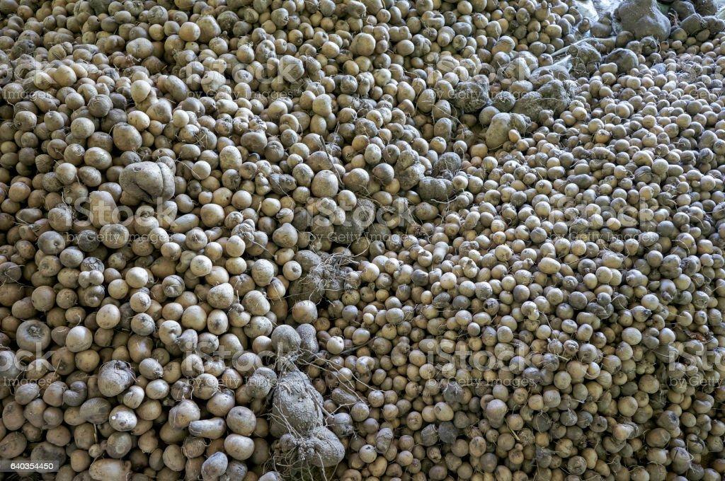 Dioscorea yam stock photo