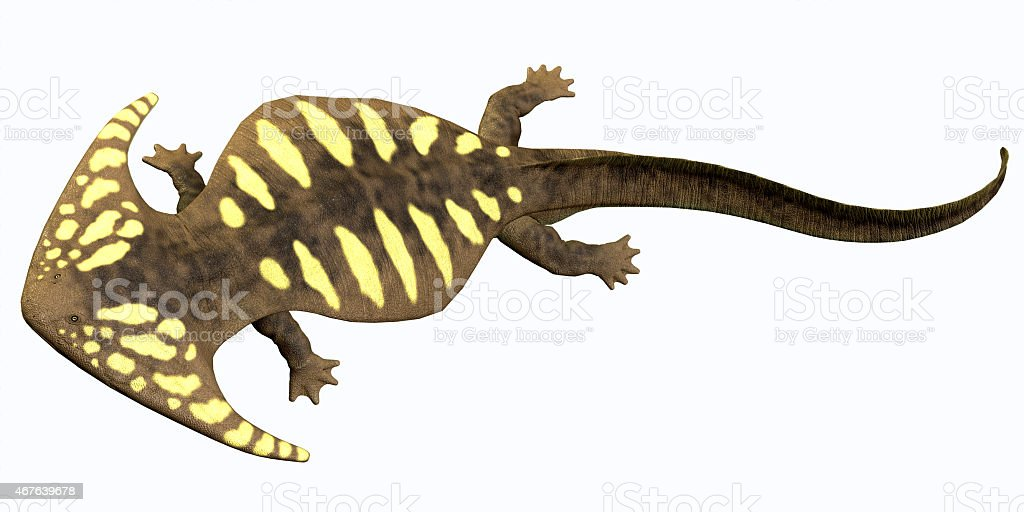 Diplocaulus Permian Amphibian vector art illustration
