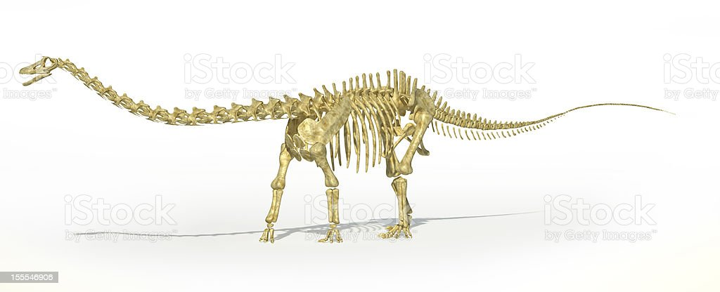 Diplodocus dinosaur full skeleton photo-realistc rendering. Perspective view. stock photo