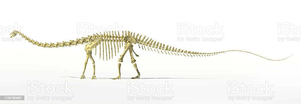 Diplodocus dinosaur full skeleton photorealistc rendering. stock photo