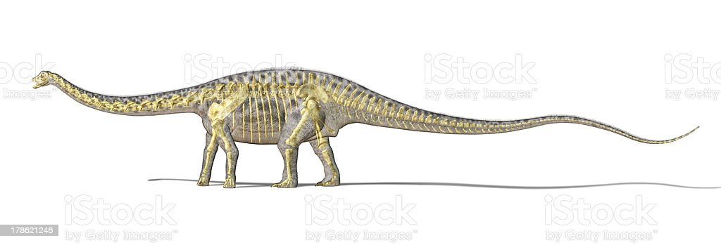 Diplodocus dinosaur photo-realistc rendering, with full skeleton superimposed. stock photo