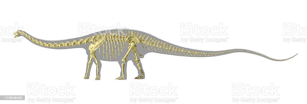 Diplodocus dinosaur silhouette, with full photorealistic skeleton. stock photo