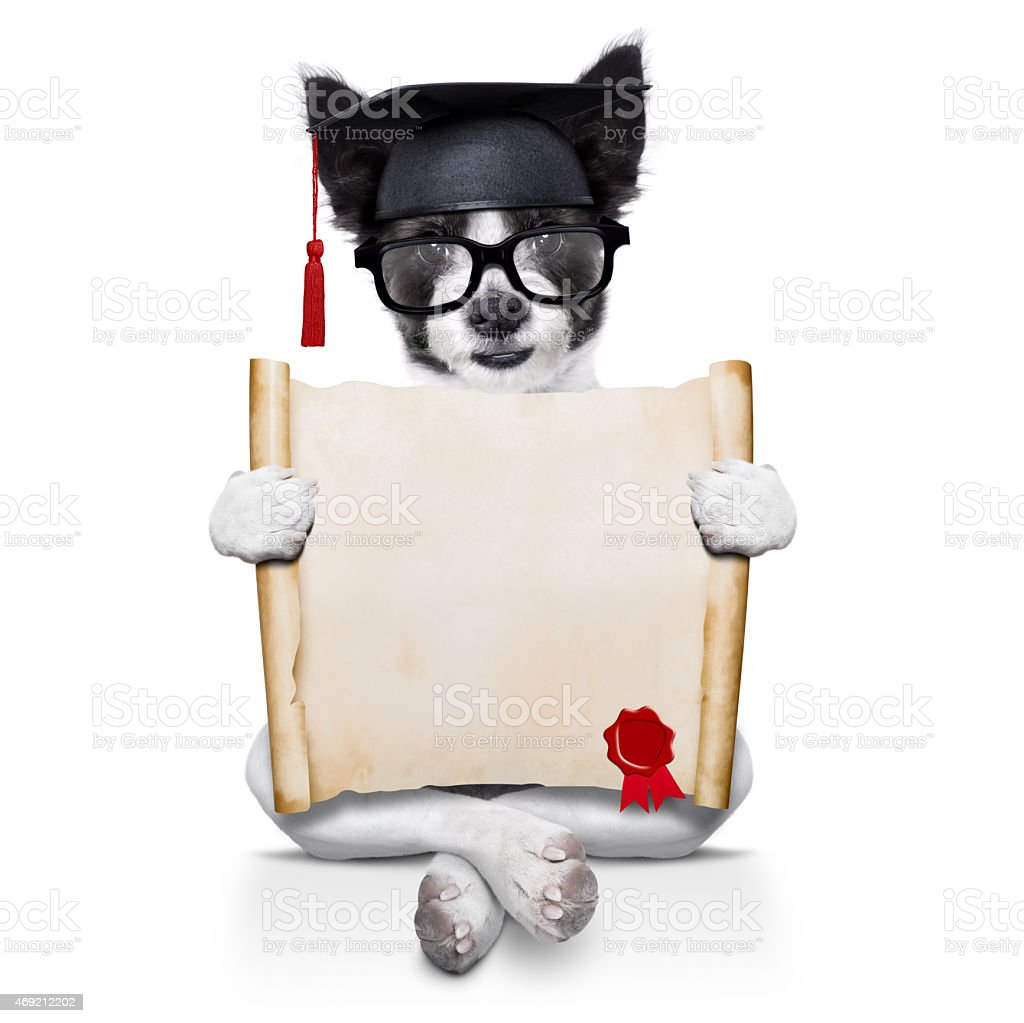 diploma dog stock photo
