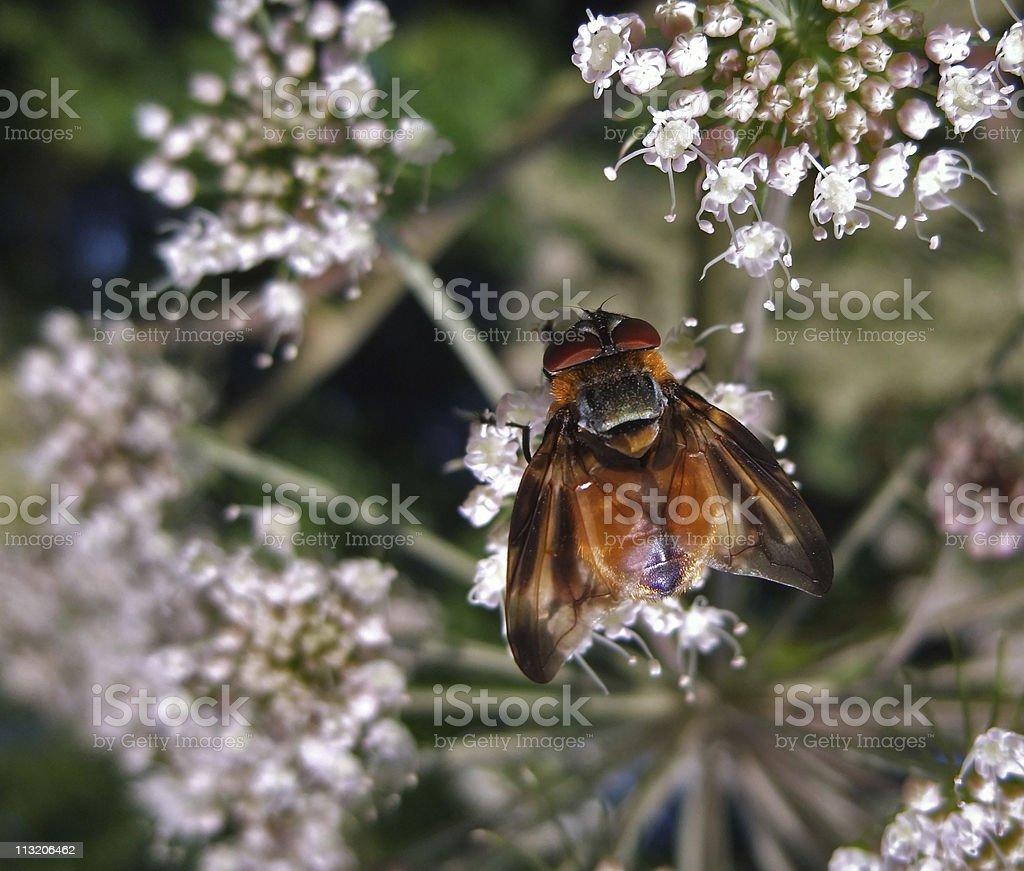Diptera in natural back stock photo