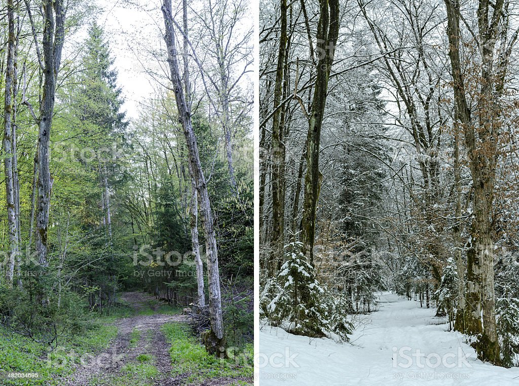 Diptych showing winter and spring in woodland stock photo