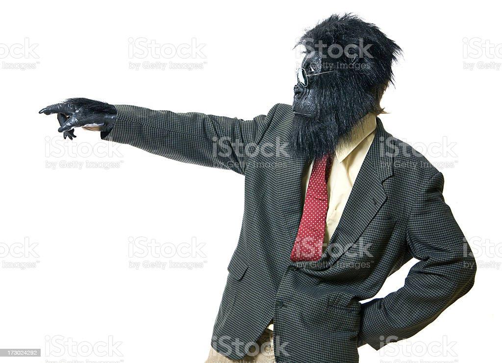 Directing Business Gorilla royalty-free stock photo