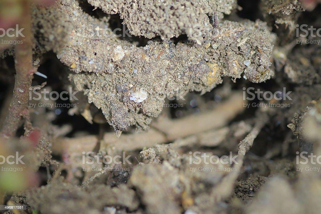 Dirt macro shot royalty-free stock photo
