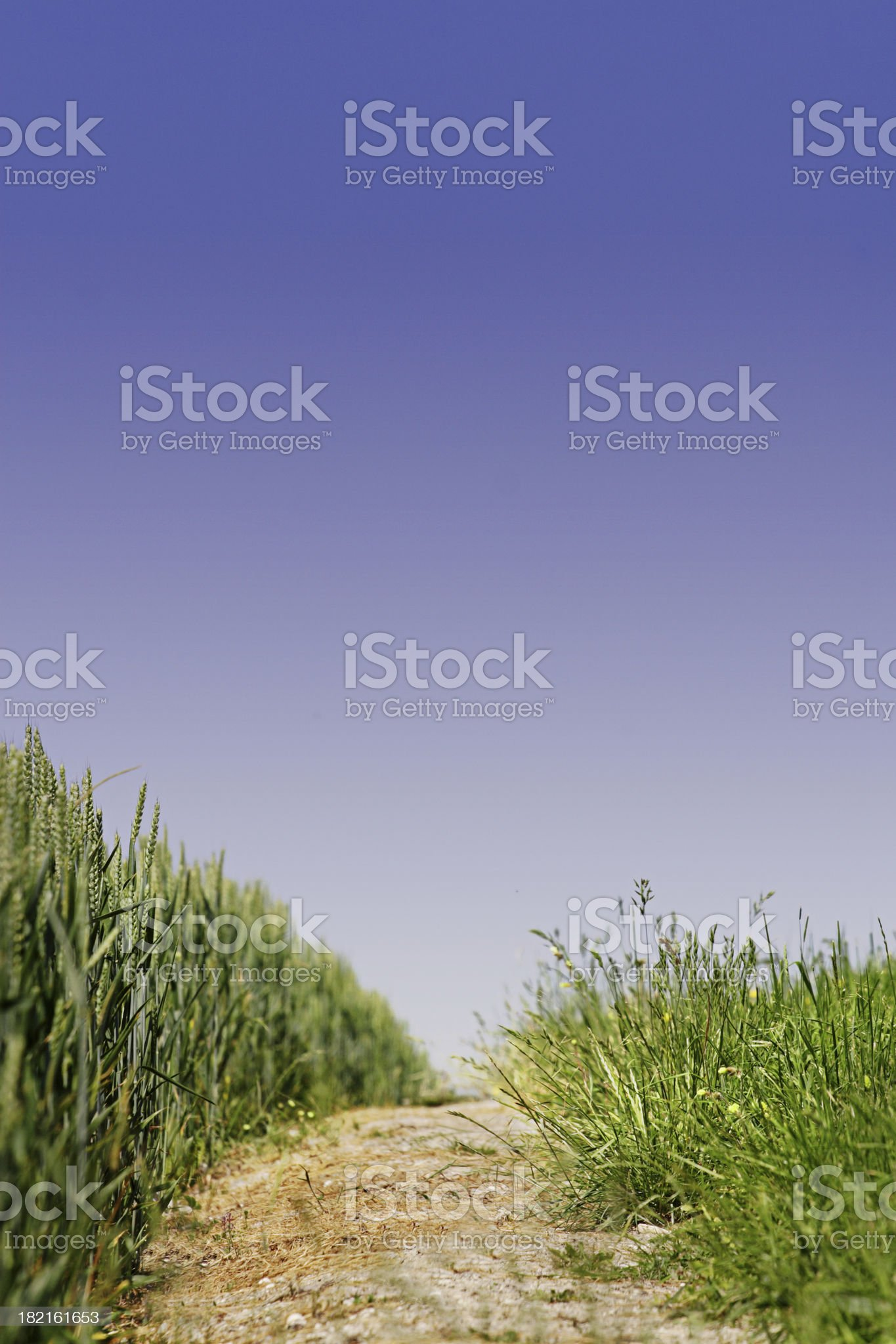Dirt path between grassy field royalty-free stock photo
