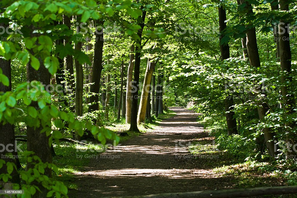 Dirt path in a lush green forest  stock photo