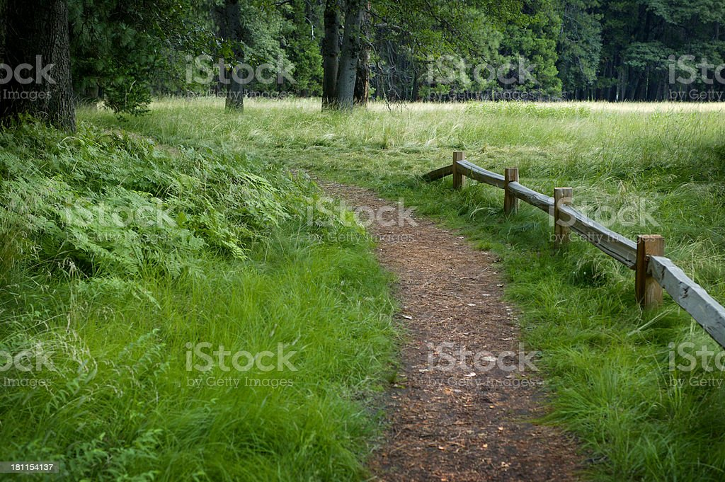 Dirt Path in Woods 2 royalty-free stock photo