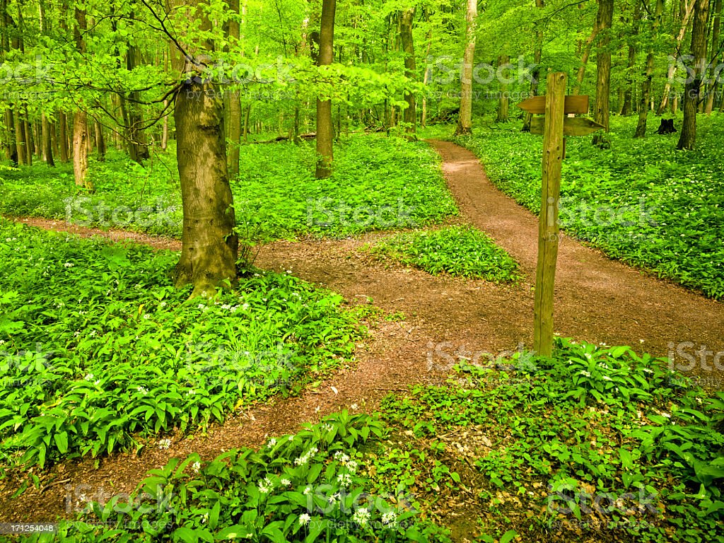 Dirt path through beech tree forest royalty-free stock photo