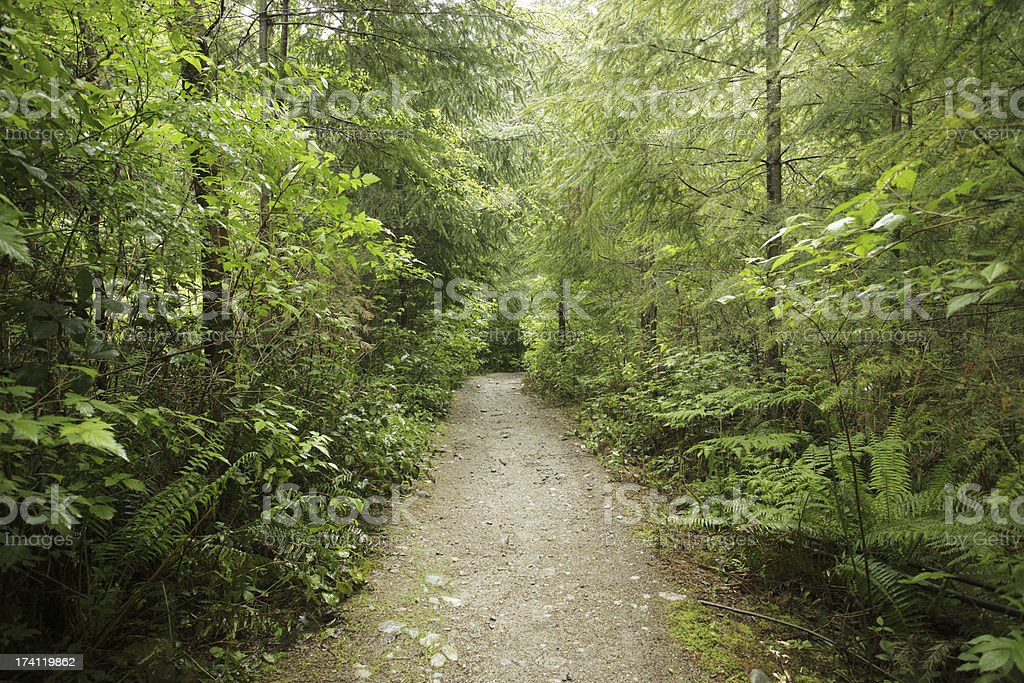 Dirt pathway in a lush forest with lots of trees royalty-free stock photo