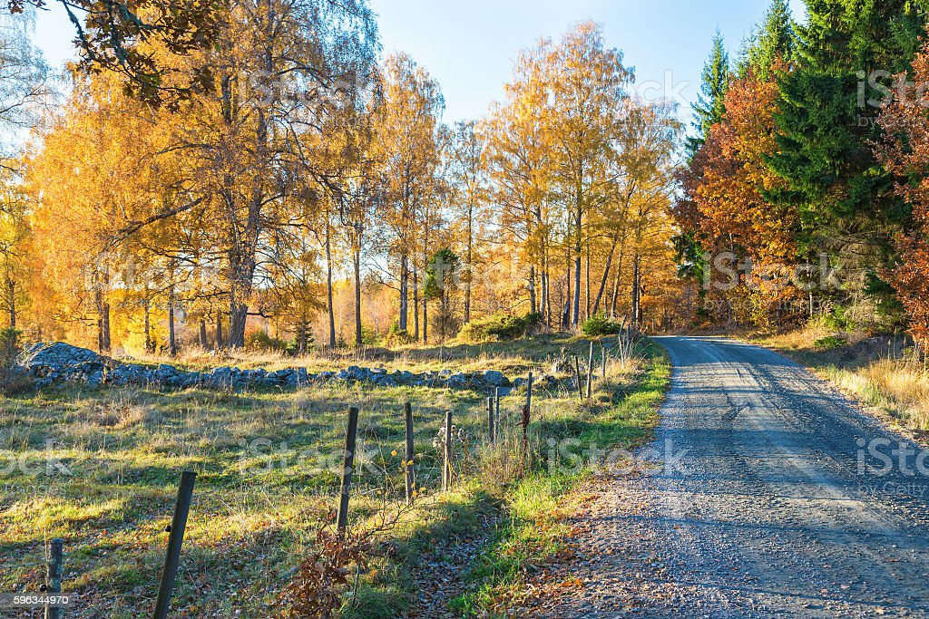 Dirt road along a meadow with autumn colors stock photo