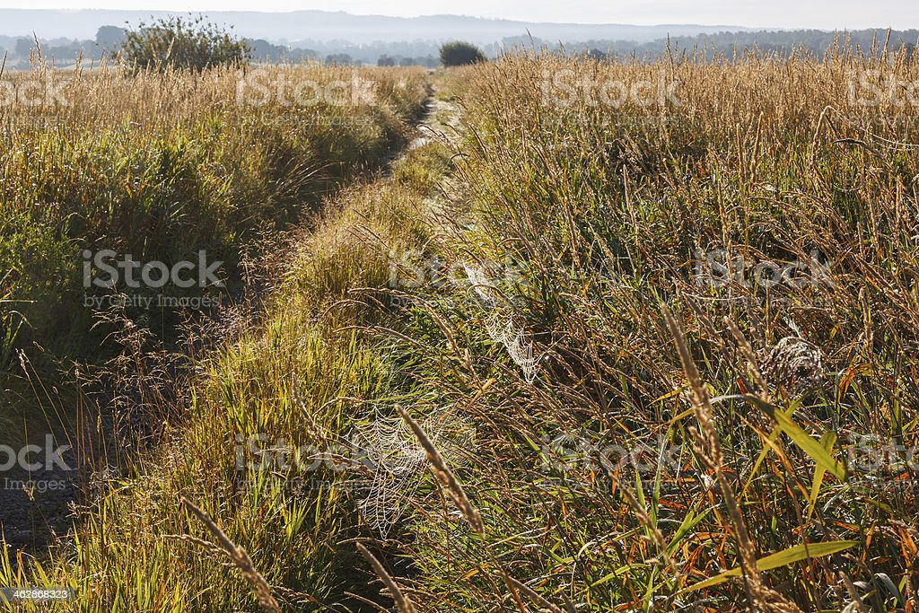 Dirt road and a spider web royalty-free stock photo