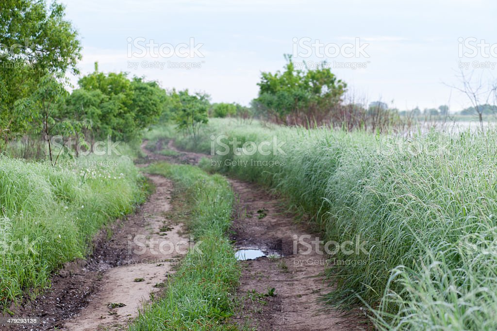 Dirt road and high grass around stock photo