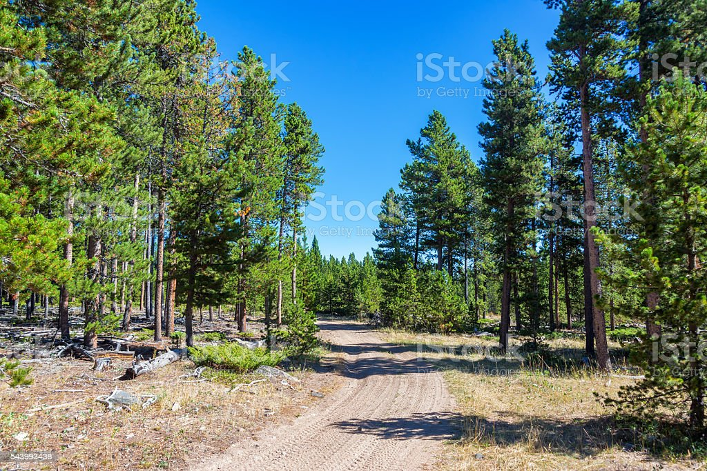 Dirt Road in a Forest stock photo