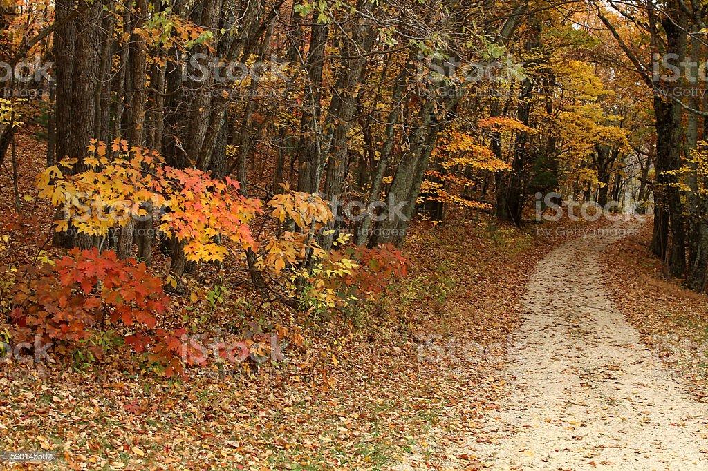 Dirt road in Autumn stock photo