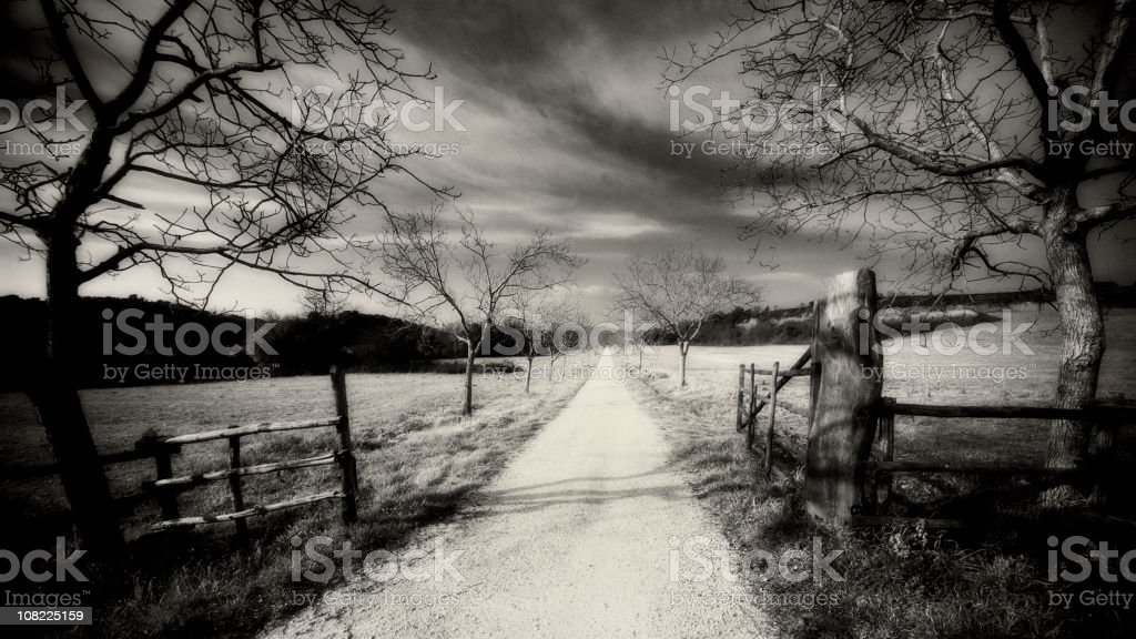 Dirt Road in Field royalty-free stock photo