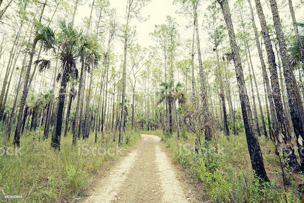 Dirt Road in Florida Everglades royalty-free stock photo