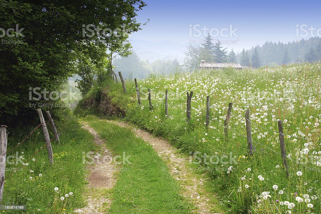 Dirt road in rural spring landscape stock photo