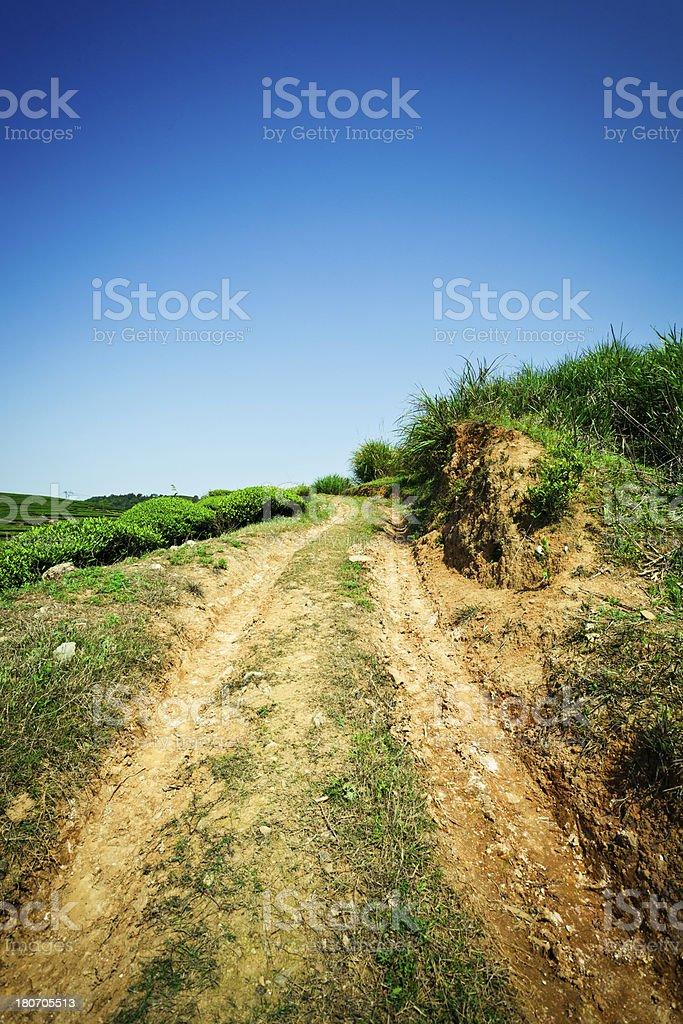 Dirt road in tea plantation royalty-free stock photo
