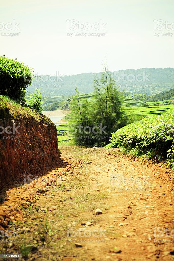 Dirt road in tea plantation royalty-free stock photo