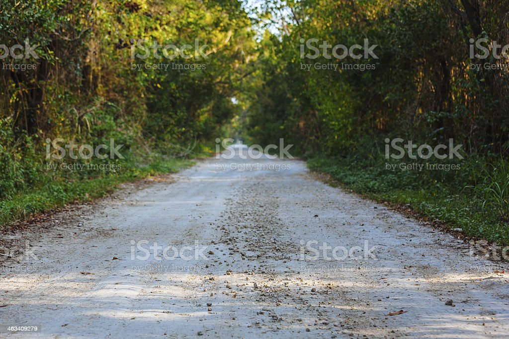Dirt Road in the Everglades National Park at Sunset royalty-free stock photo