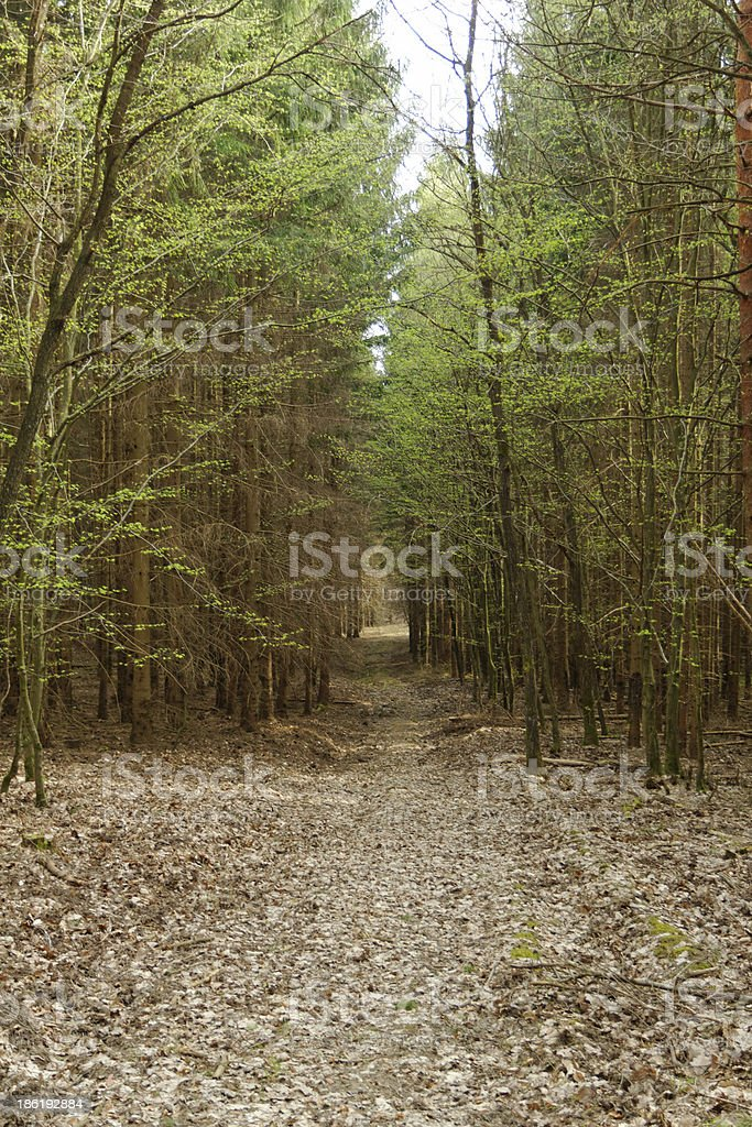 dirt road in the forest royalty-free stock photo
