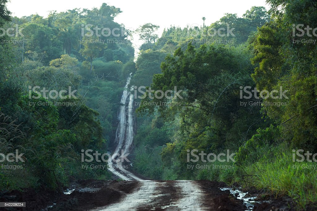 Dirt road in the jungle stock photo
