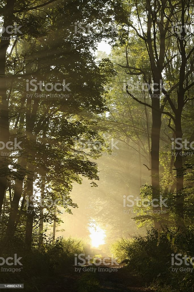 Dirt road in the misty forest stock photo