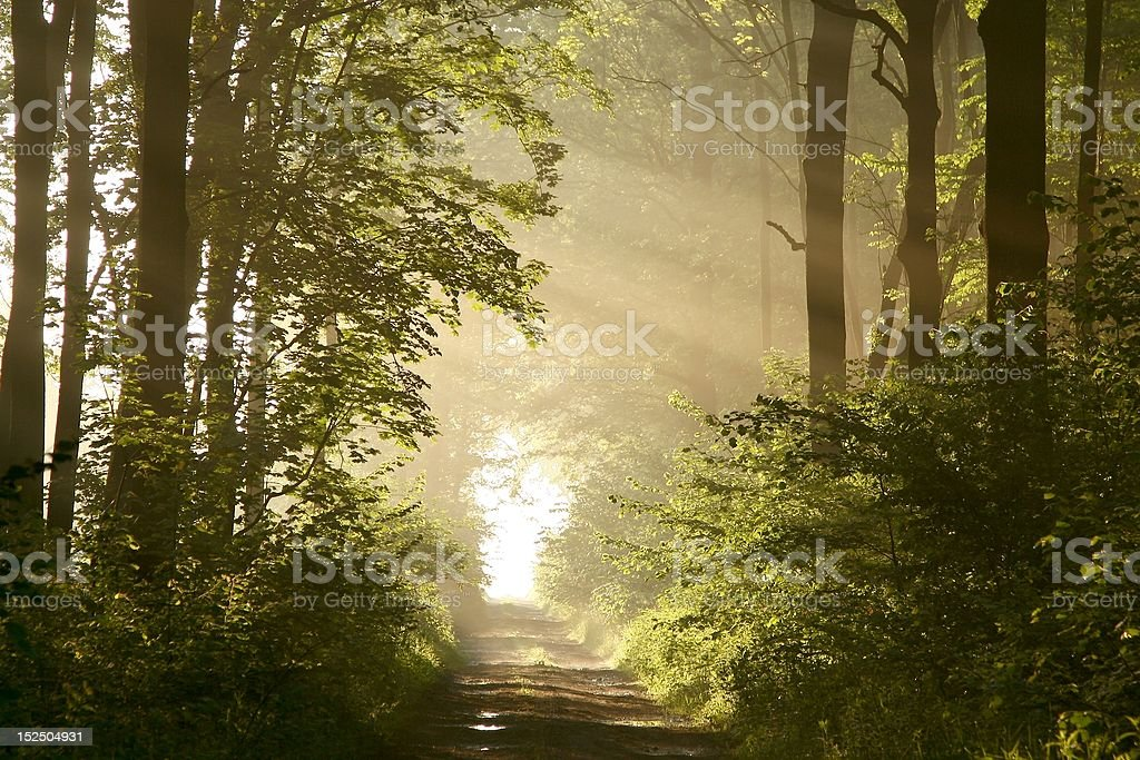 Dirt road in the misty woods at dawn royalty-free stock photo