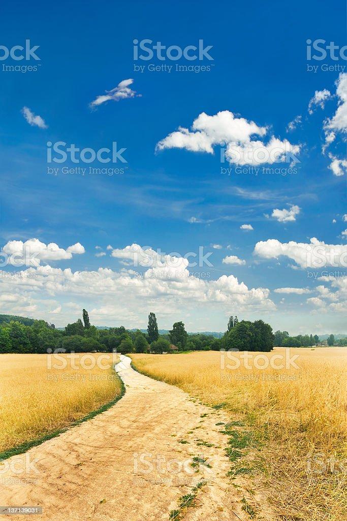 Dirt road in wheat fields XXXL royalty-free stock photo