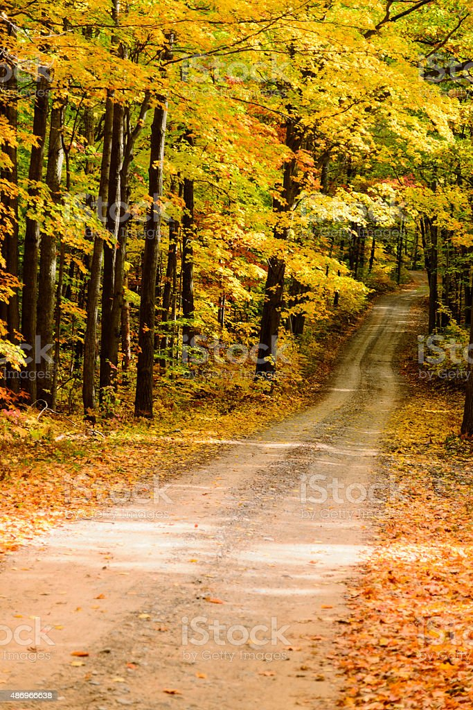 Dirt Road into Autumn Forest stock photo