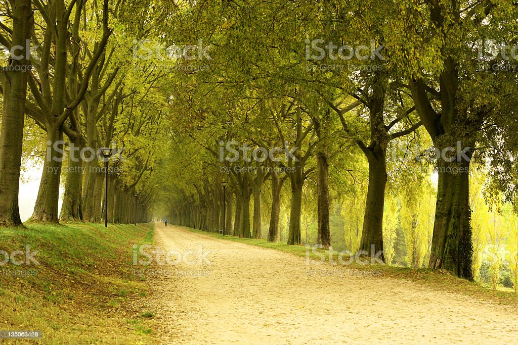A dirt road leading down a path of trees stock photo