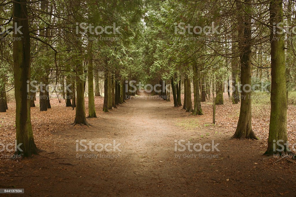 Dirt road leaving thru forest stock photo