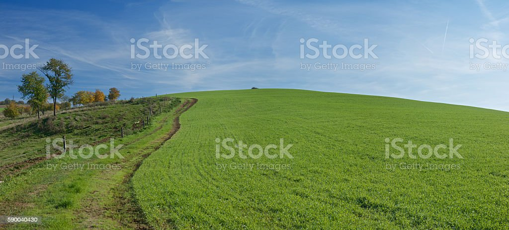Dirt road near a wheat field on a hill stock photo