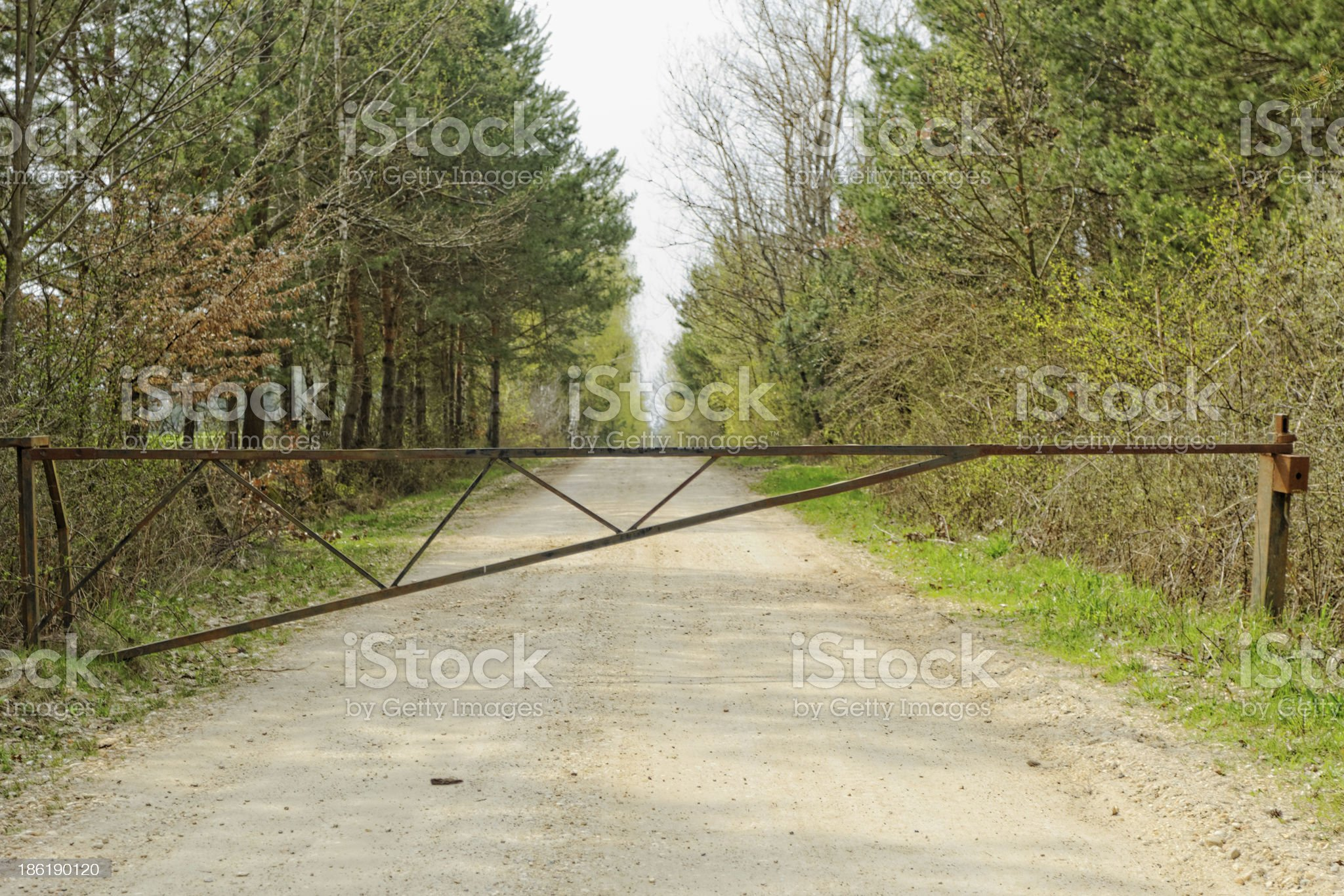 dirt road of the forest royalty-free stock photo